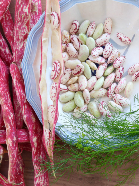 Salad: Borlotti bean salad with fennel green salad